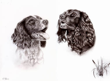 Bee and Ru dog portraits