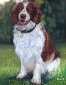 Dillon welsh spaniel