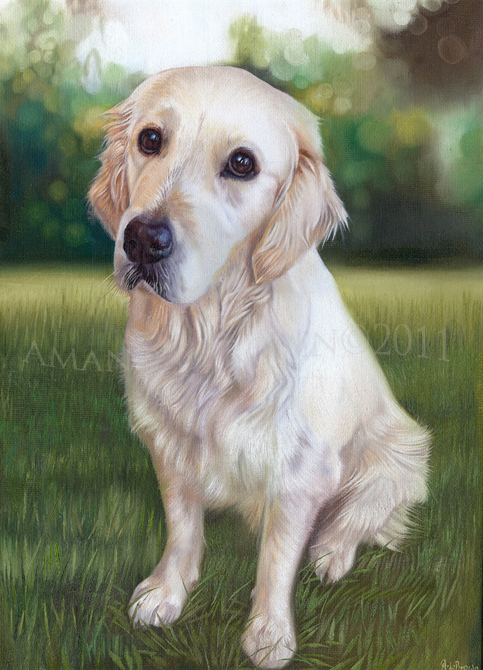 Lexie the golden retriever