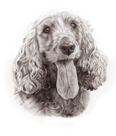 Golden Cocker Spaniel Portrait