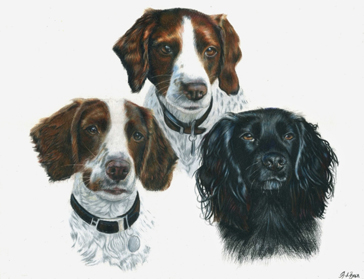 Triple dog portrait
