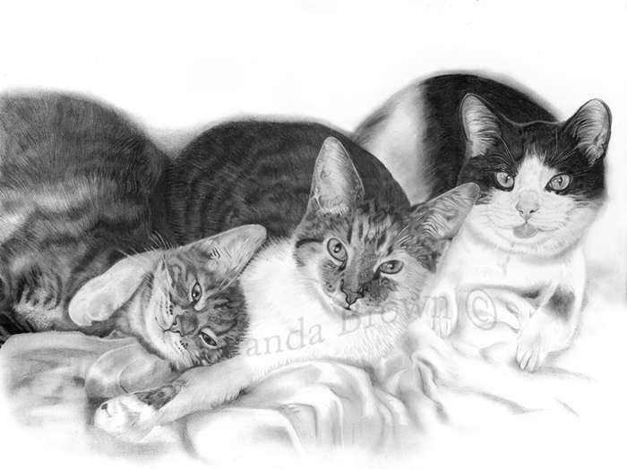 Cats drawings