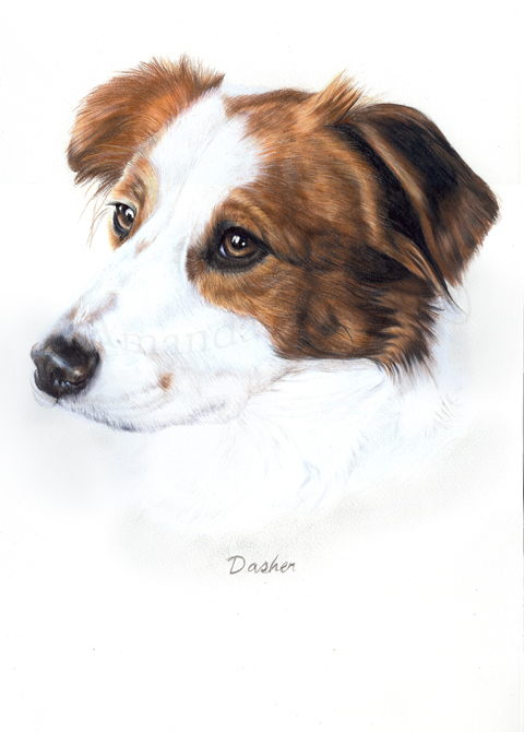 Dasher coloured pencils