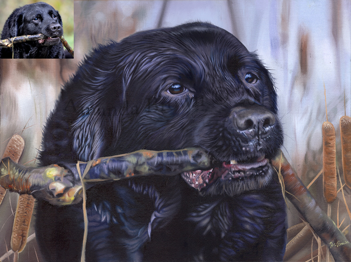 Frank the Black Labrador portraits