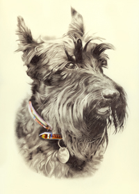 Jack the Scottie