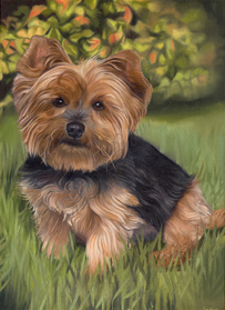Holly yorkie painting